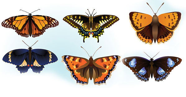 Free Butterfly Vector Graphics