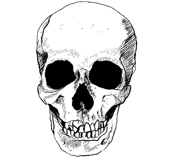 Vector skull image download free vector art free vectors vector skull image voltagebd Gallery